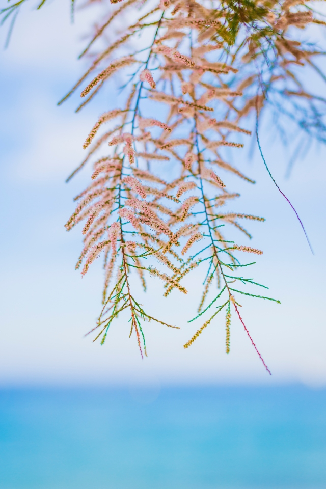 Pink branches in bloom and seaside bokeh