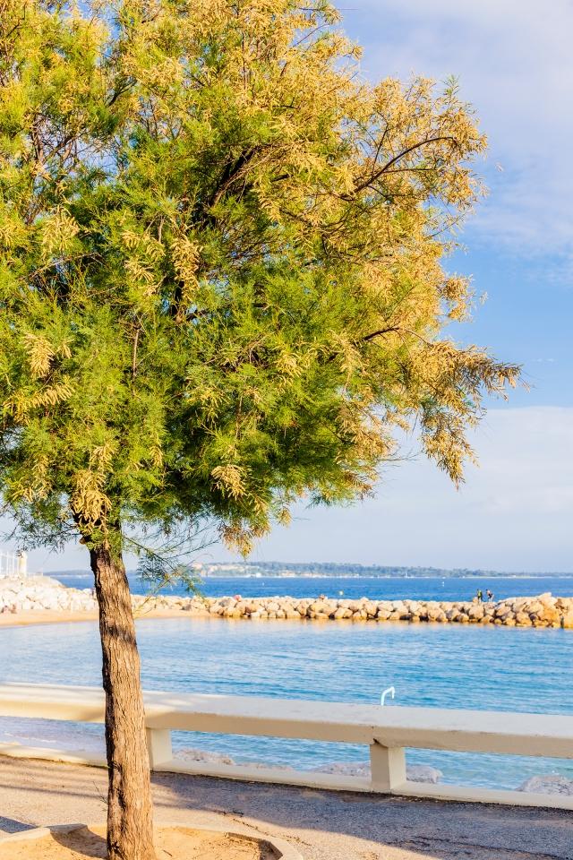 Little tree and Mediterranean seaside