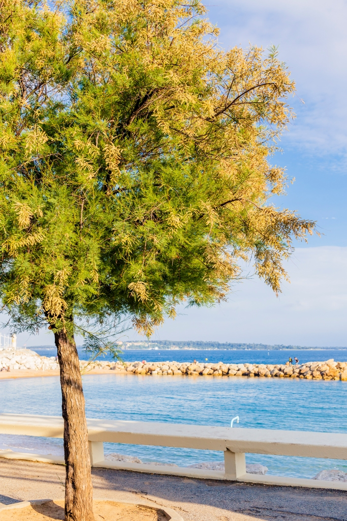 Little tree and Mediterranean seaside