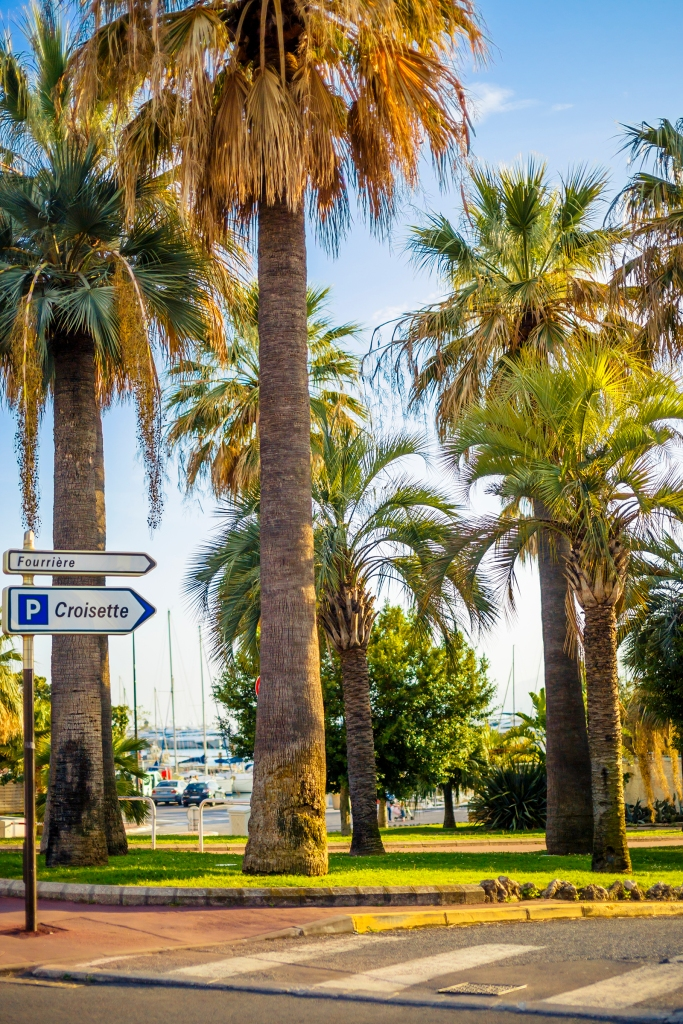 Palm trees in the Port Canto promenade