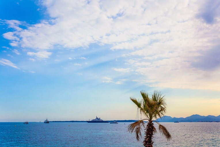 Palm tree and yachts near the coast of Cannes, French Riviera