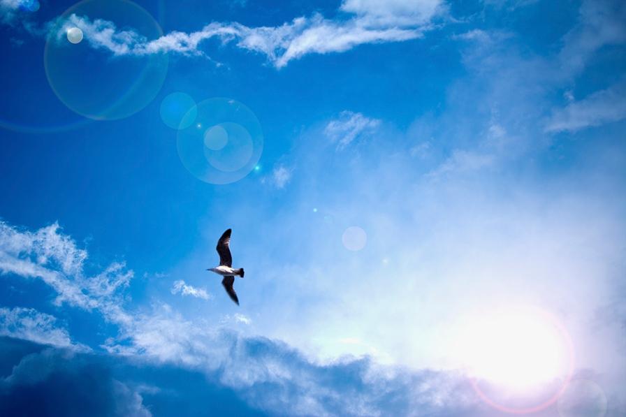 heavenly bright blue sky with sun rays and bird