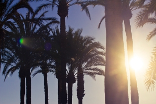 palm trees tropical sunset panorama