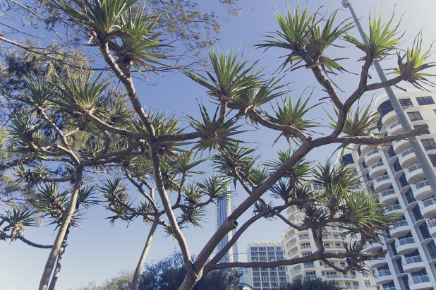 20150106 GoldCoast 0155-1
