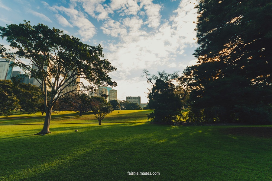 Lost in the green by Faithieimages 03