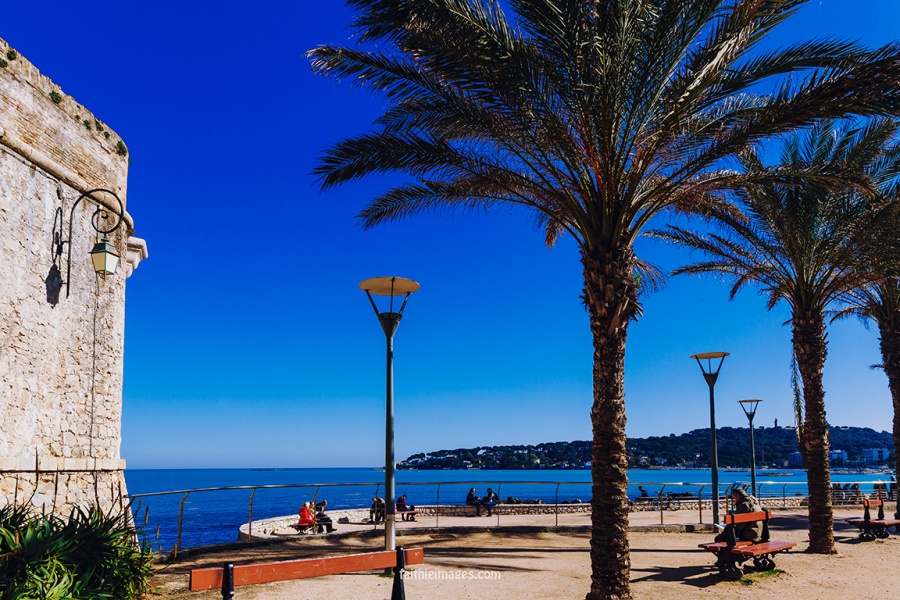 Horizon and palm trees by Faithieimages 05