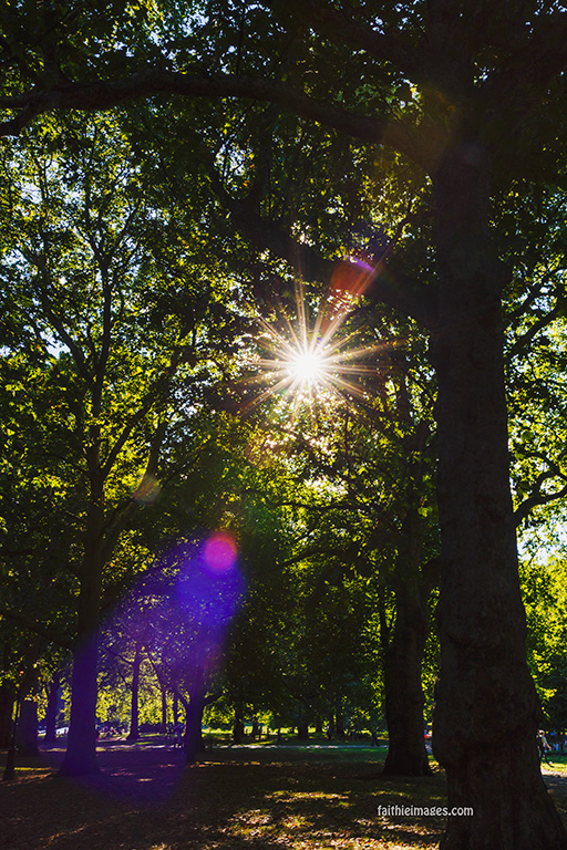 Light and leaves 02