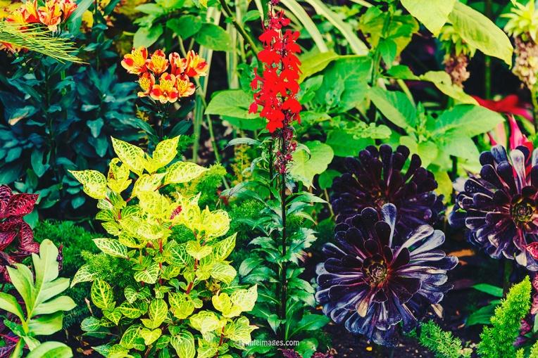Plants in St James Park London pt.2 010