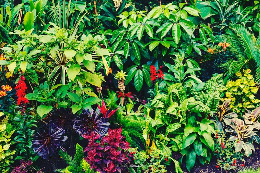 Plants in St James Park London pt.2 011
