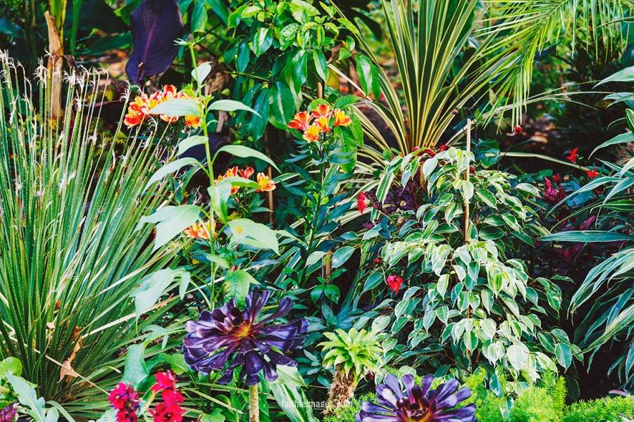 Plants in St James Park London pt.2 012