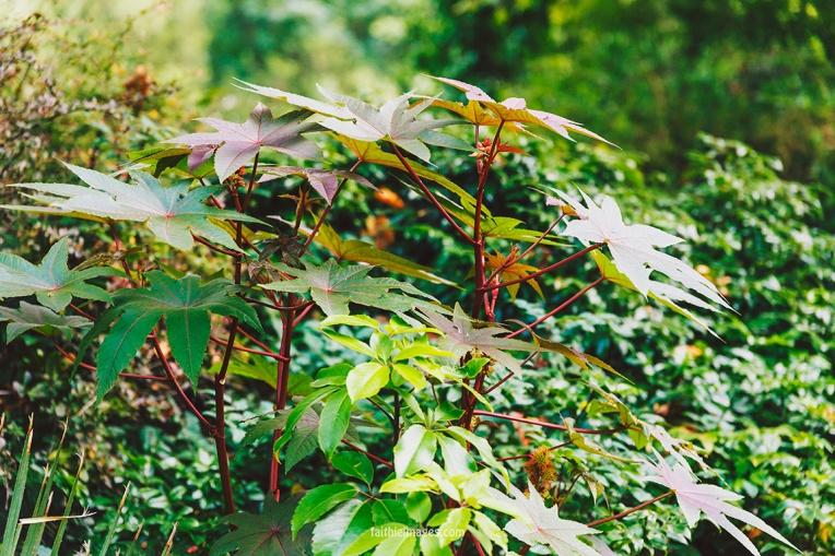 Plants in St James Park London pt.2 013