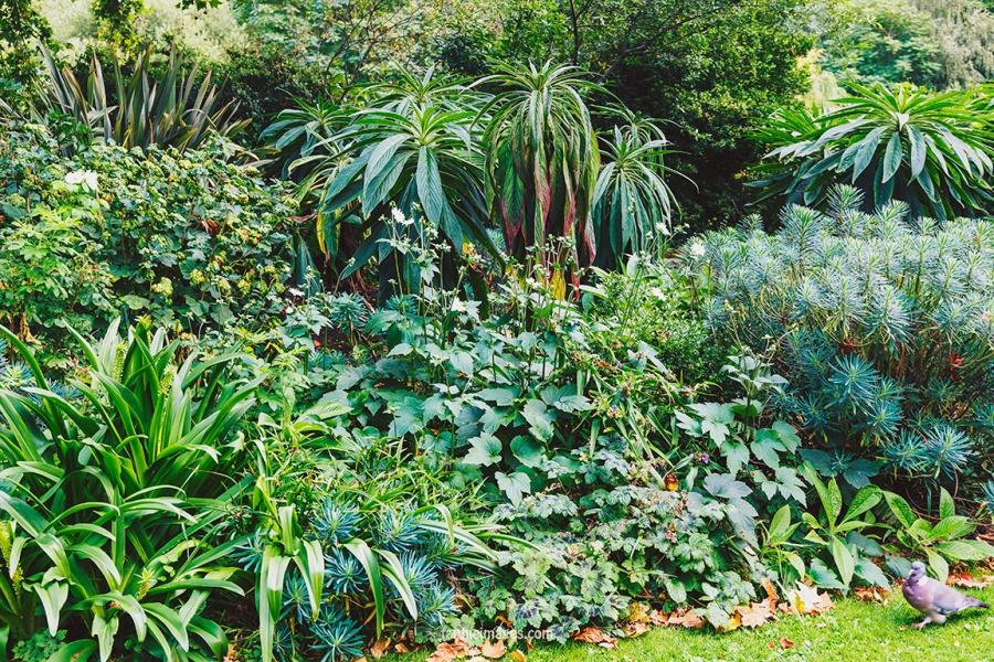Plants in St James Park London pt.2 014