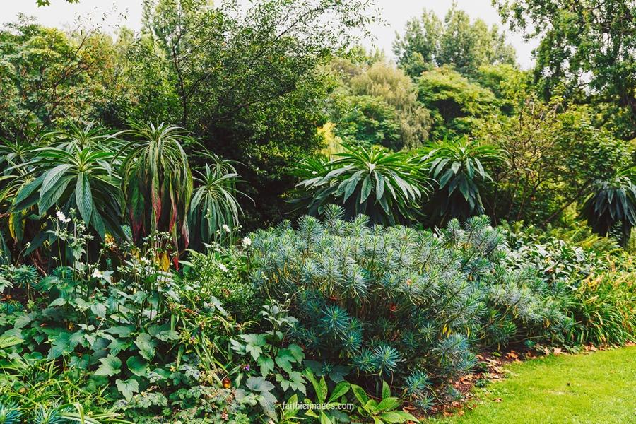 Plants in St James Park London pt.2 015