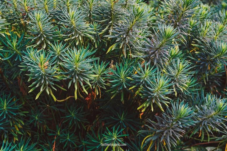 Plants in St James Park London pt.2 016