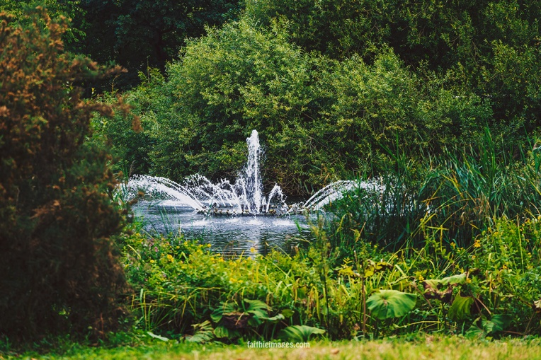 Plants in St James Park London pt.2 017