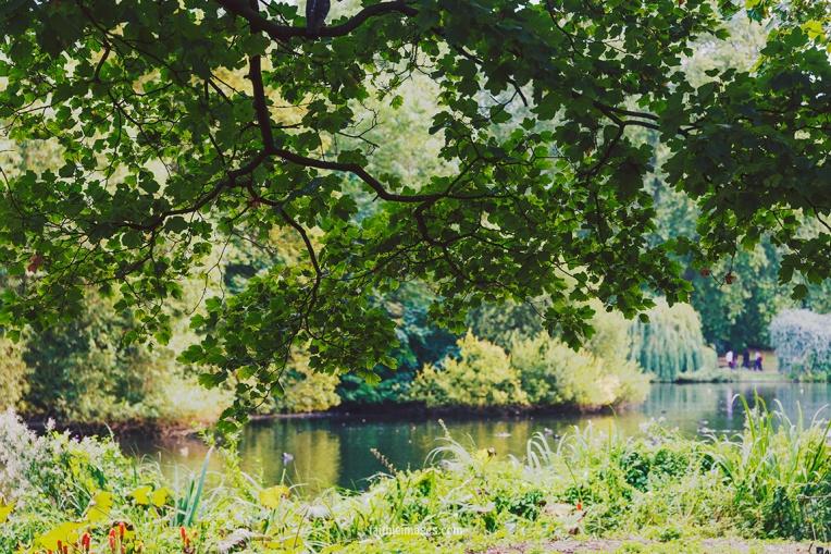 Plants in St James Park London pt.2 018