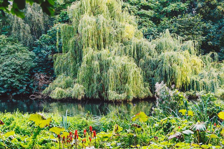 Plants in St James Park London pt.2 019