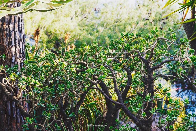 Faithieimages - Jardins de Saint Martin Monaco 003