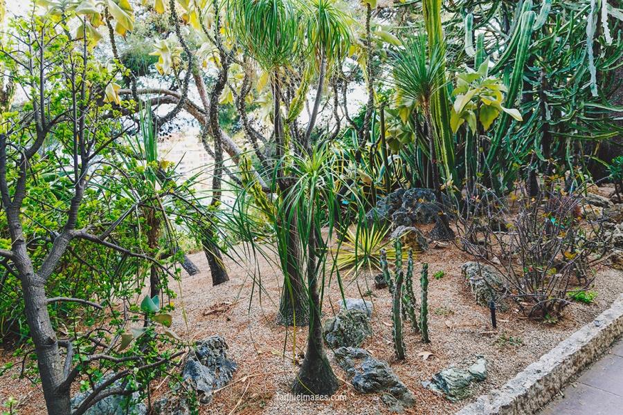 Faithieimages - Monaco Gardens