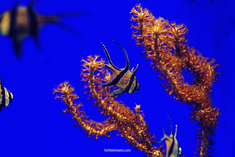 Faithieimages - Monaco Aquarium Musée Océanographique Pt.1 001