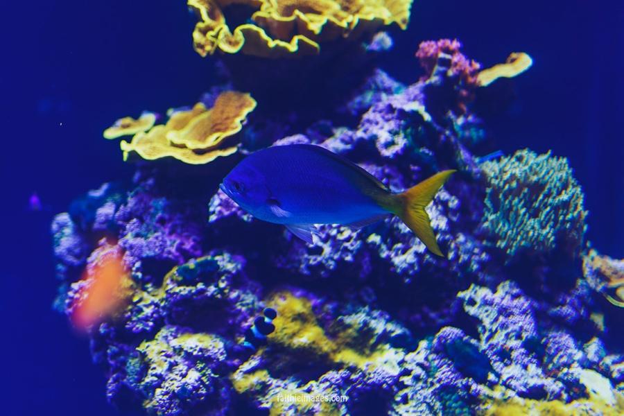 Faithieimages - Monaco Aquarium Musée Océanographique Pt.1 002