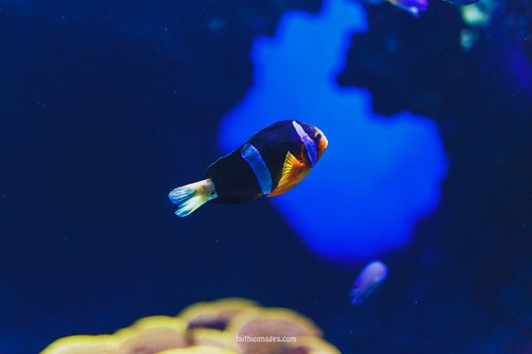 Faithieimages - Monaco Aquarium Musée Océanographique Pt.1 004