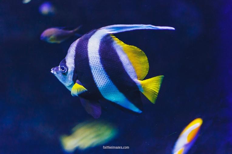 Faithieimages - Monaco Aquarium Musée Océanographique Pt.1 005