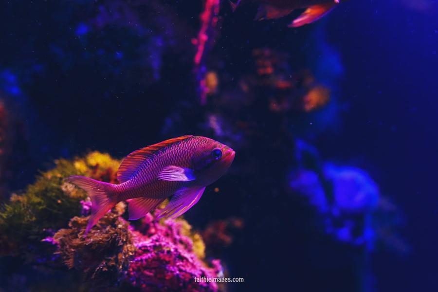 Faithieimages - Monaco Aquarium Musée Océanographique Pt.1 006
