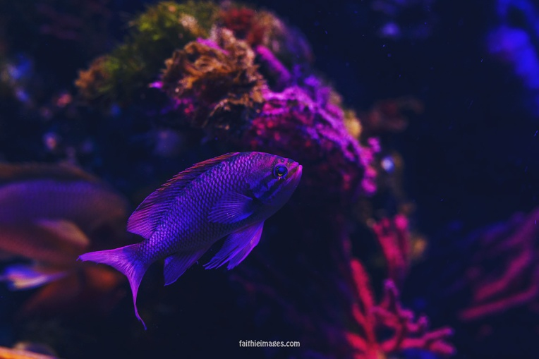 Faithieimages - Monaco Aquarium Musée Océanographique Pt.1 007