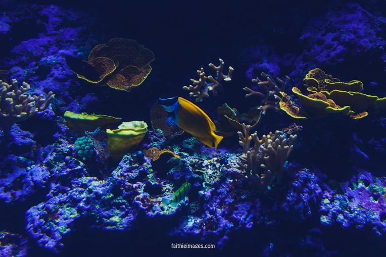 Faithieimages - Monaco Aquarium Musée Océanographique Pt.1 009