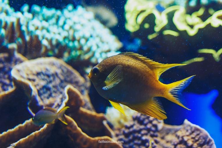 Faithieimages - Monaco Aquarium Musée Océanographique Pt.1 015