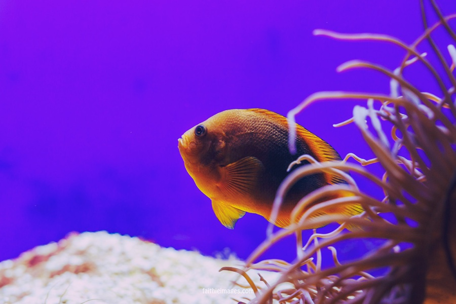 Faithieimages - Monaco Aquarium Musée Océanographique Pt.1 017