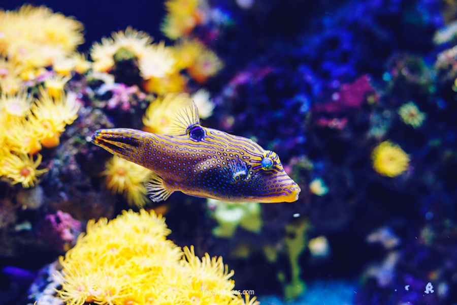 Faithieimages - Monaco Aquarium Musée Océanographique Pt.1 018