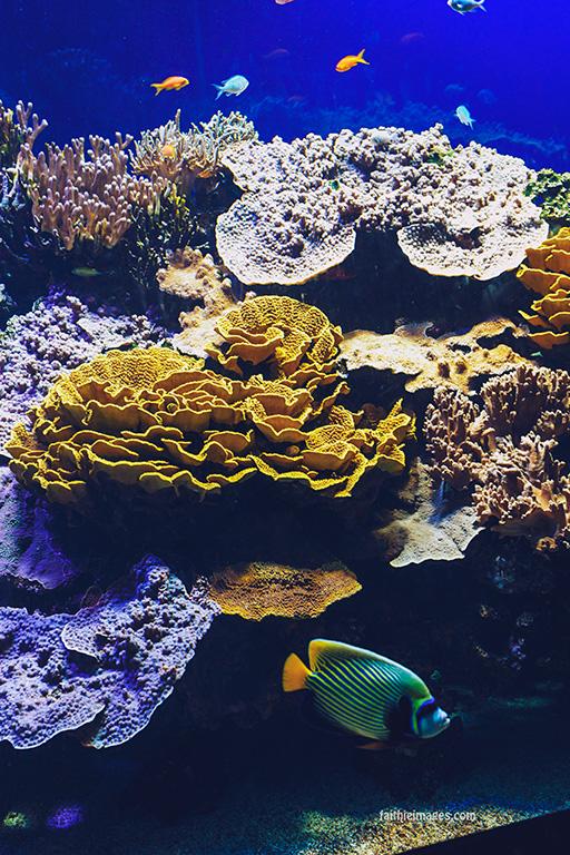 Faithieimages - Monaco Aquarium Musée Océanographique Pt.2 001