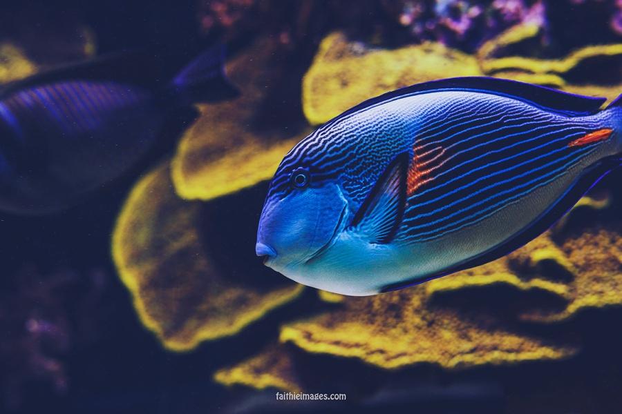 Faithieimages - Monaco Aquarium Musée Océanographique Pt.2 003