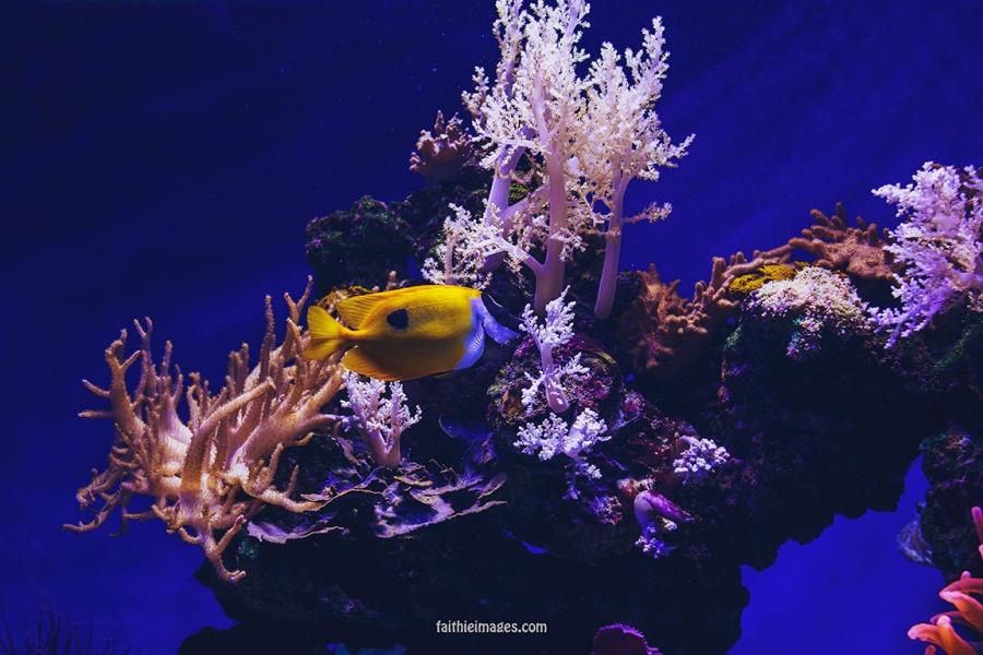 Faithieimages - Monaco Aquarium Musée Océanographique Pt.2 004