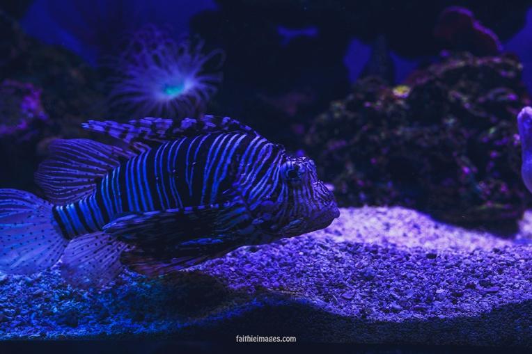 Faithieimages - Monaco Aquarium Musée Océanographique Pt.2 005