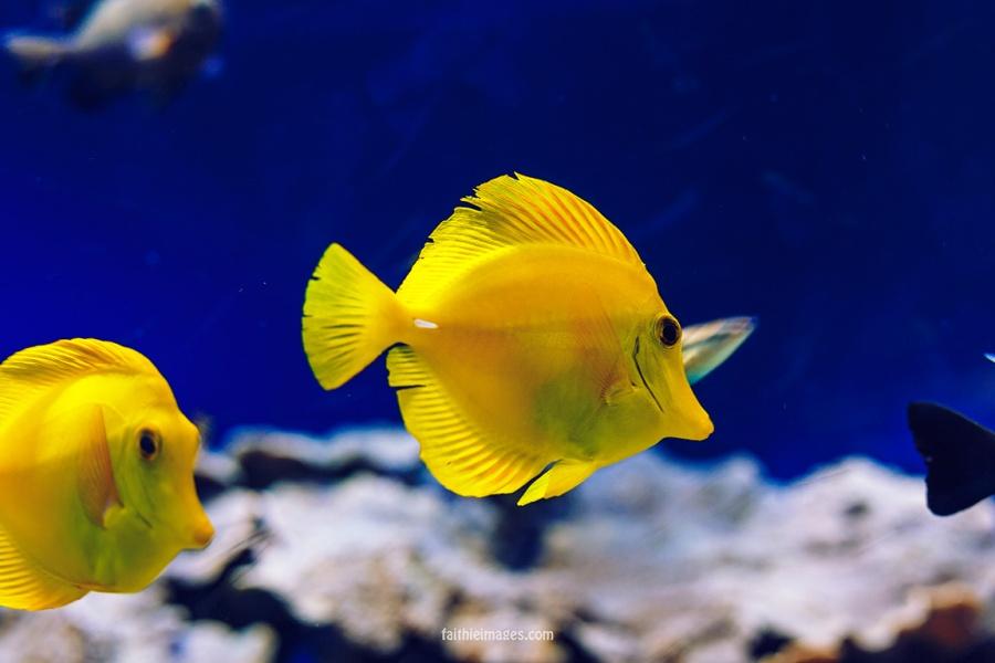 Faithieimages - Monaco Aquarium Musée Océanographique Pt.2 007