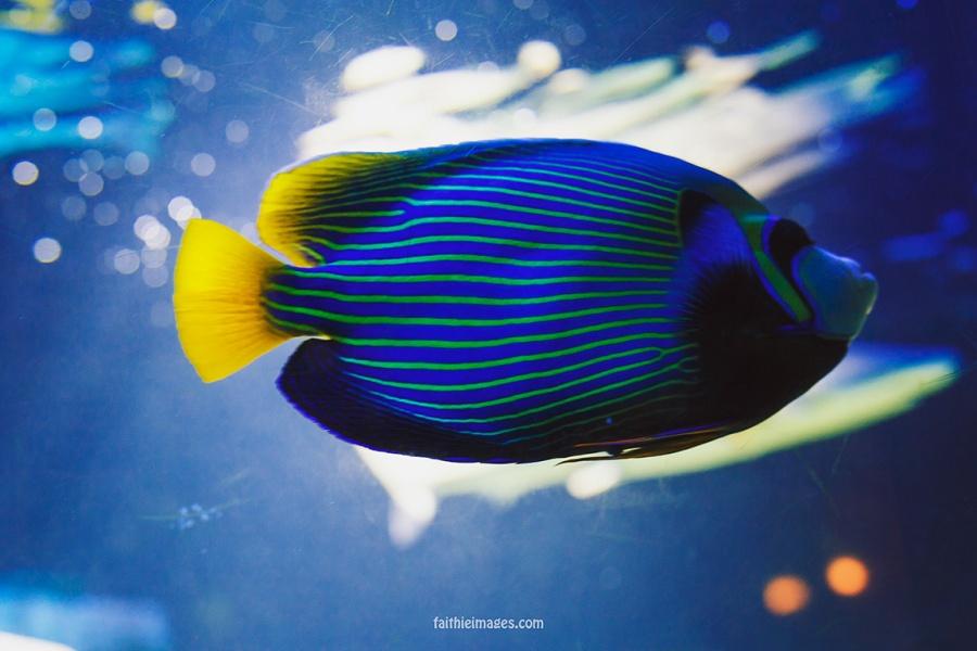 Faithieimages - Monaco Aquarium Musée Océanographique Pt.2 008