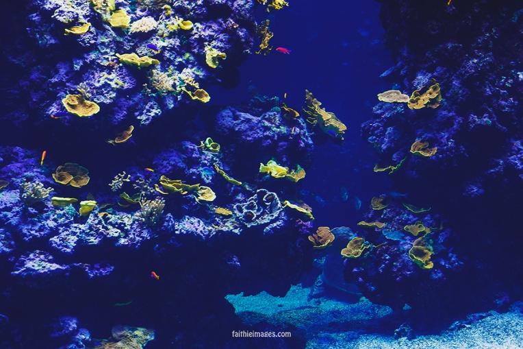 Faithieimages - Monaco Aquarium Musée Océanographique Pt.2 010