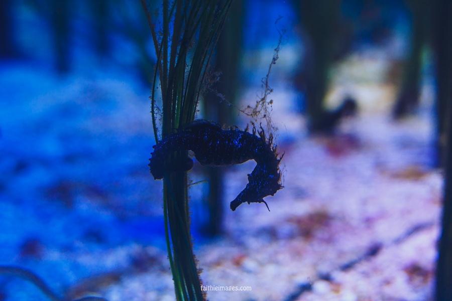 Faithieimages - Monaco Aquarium Musée Océanographique Pt.2 011