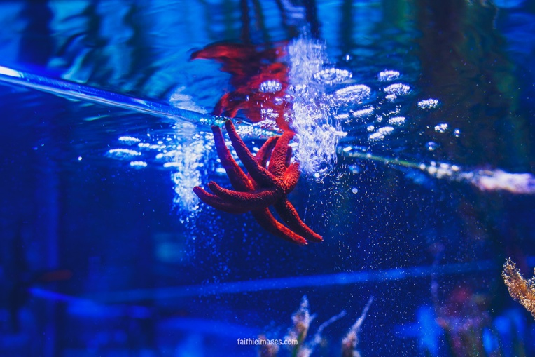 Faithieimages - Monaco Aquarium Musée Océanographique Pt.2 012