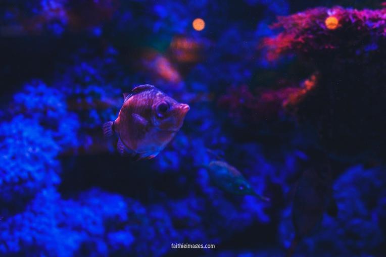 Faithieimages - Monaco Aquarium Musée Océanographique Pt.2 017