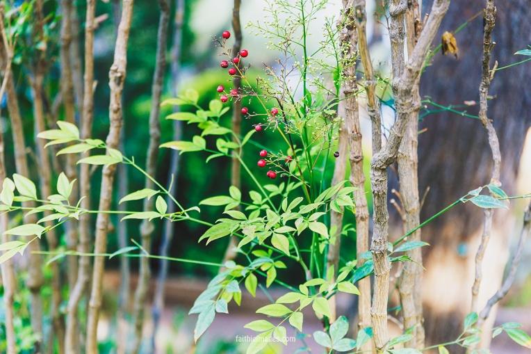 Faithieimages - Monaco Gardens pt. 2 005