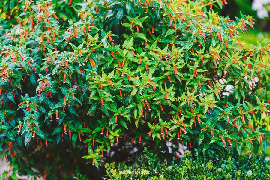Faithieimages - Monaco Gardens pt. 2 007