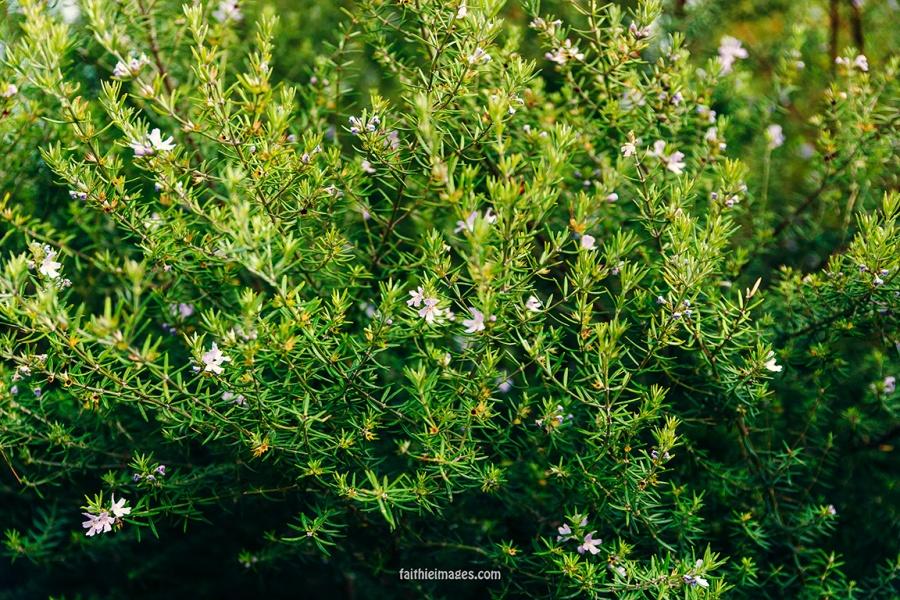 Faithieimages - Monaco Gardens pt. 2 010