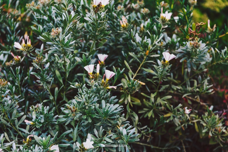 Faithieimages - Monaco Gardens pt. 2 014