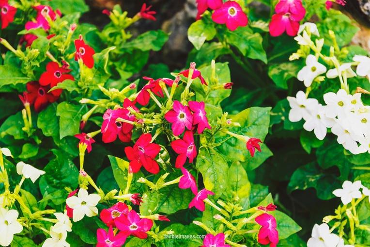 Faithieimages - Monaco Gardens pt. 2 016