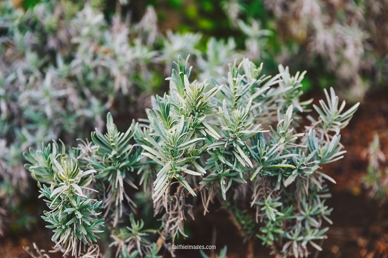 Faithieimages - Monaco Gardens pt. 2 018