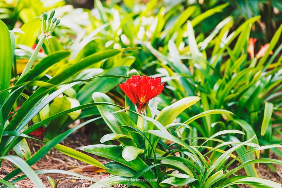 Faithieimages - Monaco Gardens pt. 2 019